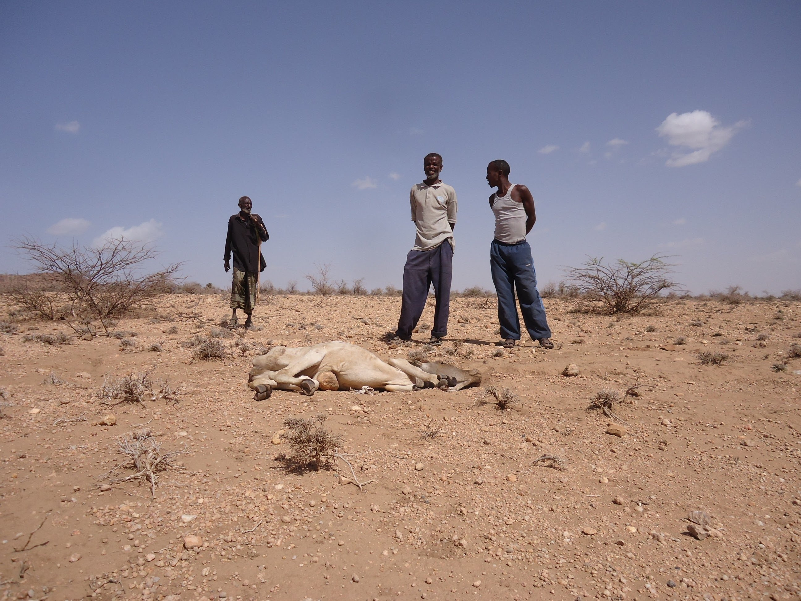 Image result for animals dying in ethiopia somali region