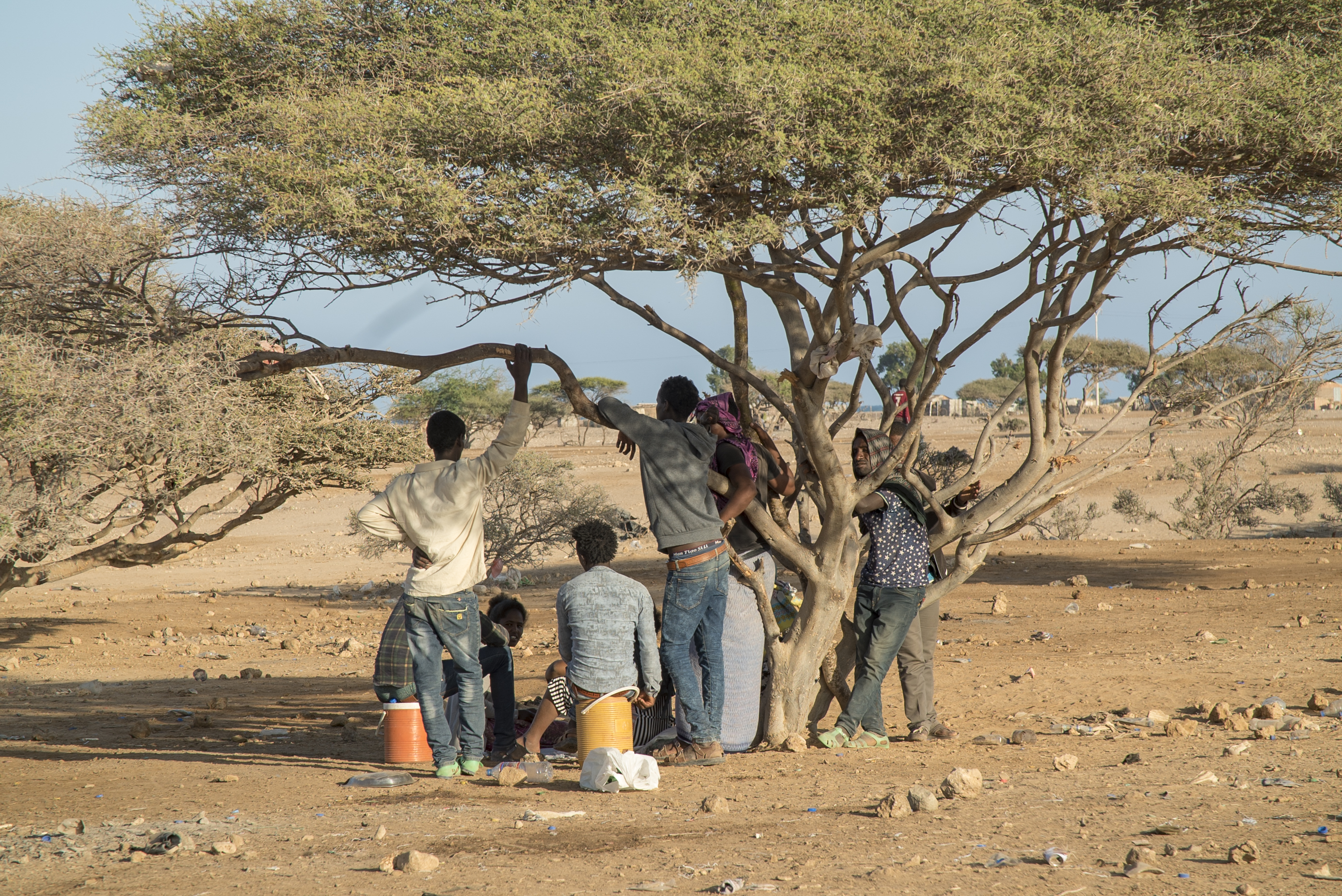 A group of men stand, facing away, in the shade of a tree in an arid landscape outside a settlement