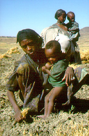 [Ethiopia] Woman harvesting and breastfeeding in Samre, Tigray.