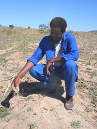 [Swaziland] Drought continues in lowveld.