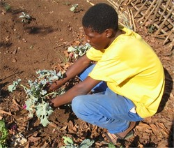 [Swaziland] Dwazi farmer with little to show. [Date picture taken: 11/01/2005]
