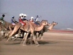 [UAE - Abu Dhabi] Child jockeys are now banned in the UAE. [Date picture taken: 11/24/2006]