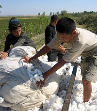 [Kyrgyzstan] Farming organic cotton in Jalal-Abad province. [Date picture taken: 02/07/2005]