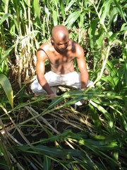 [Swaziland] Swazi farmer Sifiso Mamba in his maize plot. [Date picture taken: March 2006]