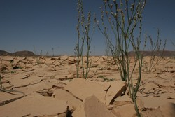 The once fertile land with all types of flora and fauna has painfully turned into a hostile terrain, Jordan, 24 May 2006. Public officials say the kingdom has been robbed of its fair share of surface water because neighbouring countries help themselves t