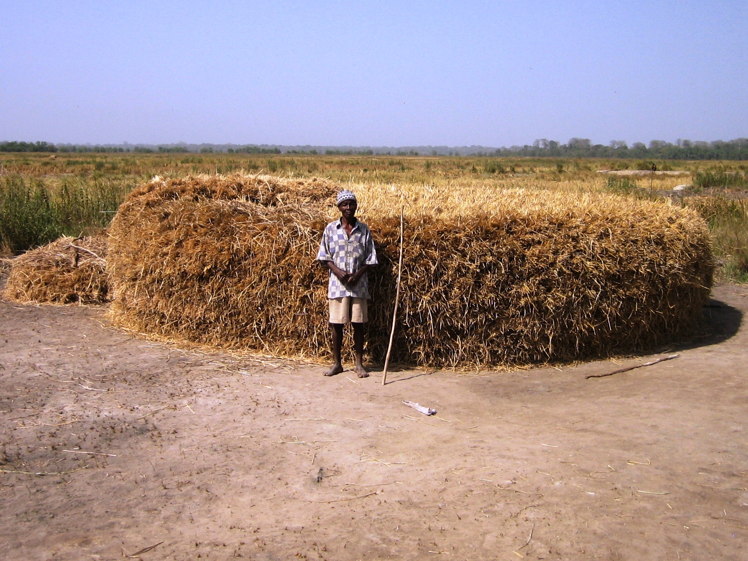Domingos Embana, a rice farmer in front to his harvest, ready to start thrashing the rice  between the towns of Bafata and Bissau, Guinea Bissau, 26 January 2007