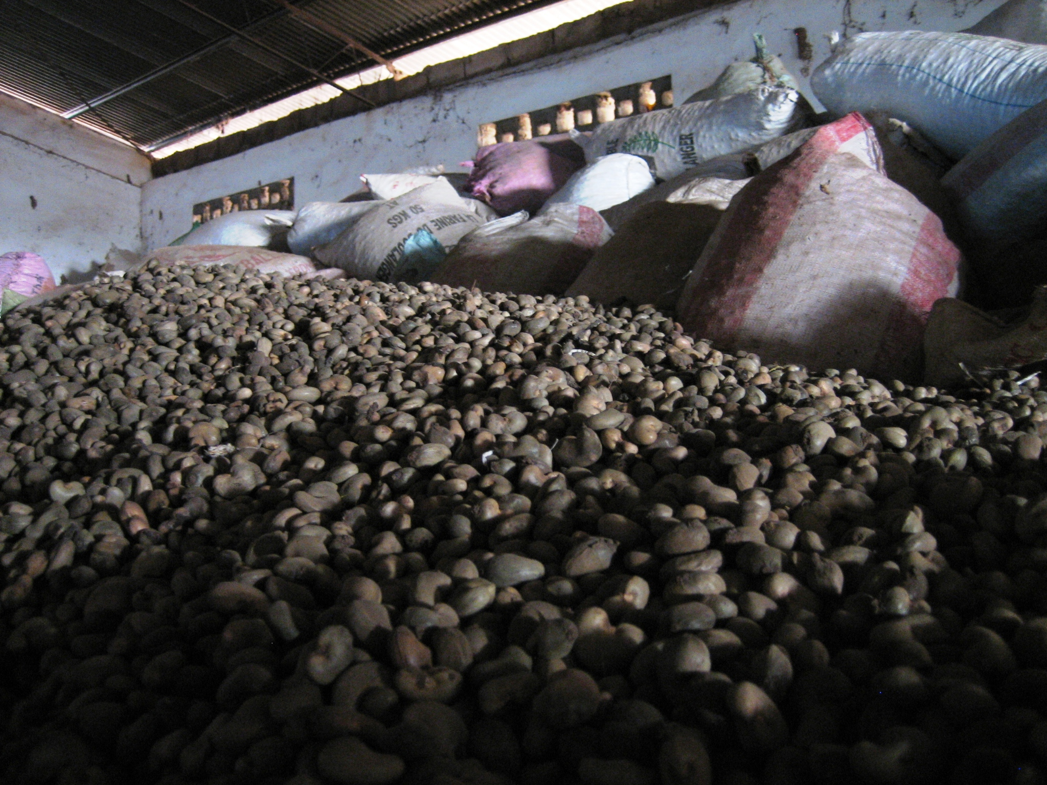 With cashew buyers not buying Guinea Bissau's 2006 crop, tens of thousands of tons sit piled up in warehouses and much of the harvest is now rotting, Buba, capital of Quinara Region in southern Guinea Bissau, 26 Jan 2007