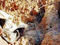 Forensic experts describe finding human remains with