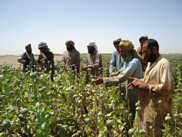 Young men in the poppy fields of Helmand Province, southern Afghanistan. Helmand alone produces about 50 percent of Afghanistan's annual 8,200 metric tonnes of opium.