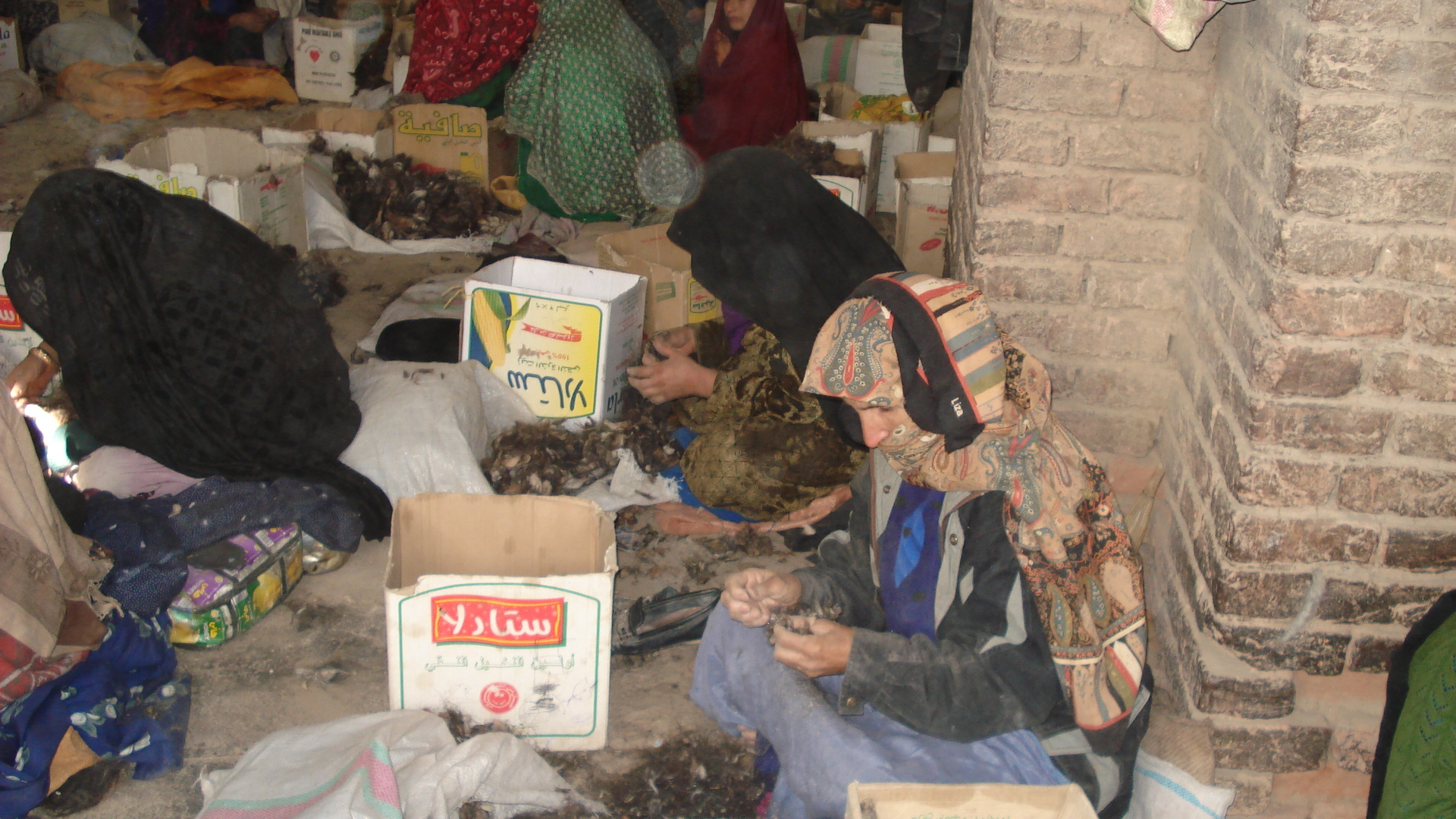 Over 1,500 women work in four wool and fur factories in Herat city.