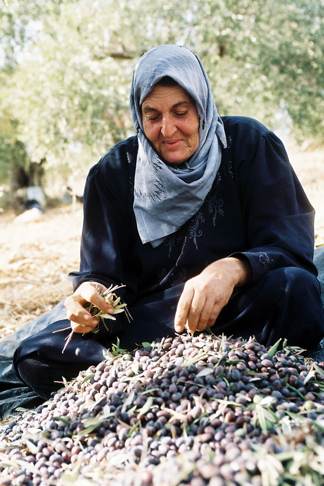 Aitaf Abdel Raul is the only person in her family to be granted a permit to harvest. Much of Jayyous' agricultural land lies between the separation barrier and Israel, requiring all Palestinians to have a permit to access the area.