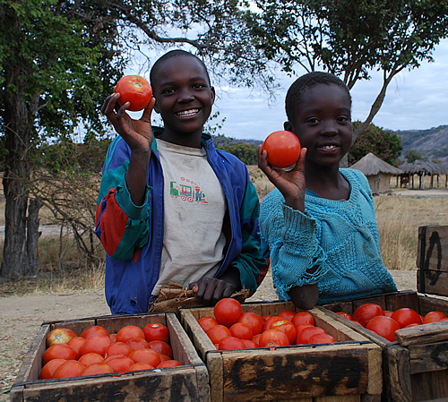 Young girls in Domboshava, Zimbabwe, show off their crop of tomatoes waiting to be transported to Mbare vegetable market in the capital Harare.