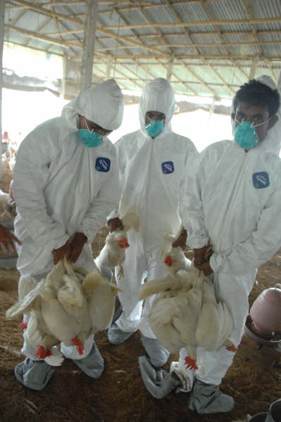 Although there has yet to be any confirmed cases of human infection, the Bangladeshi government has already taken a number of steps to mitigate that threat of bird flu.