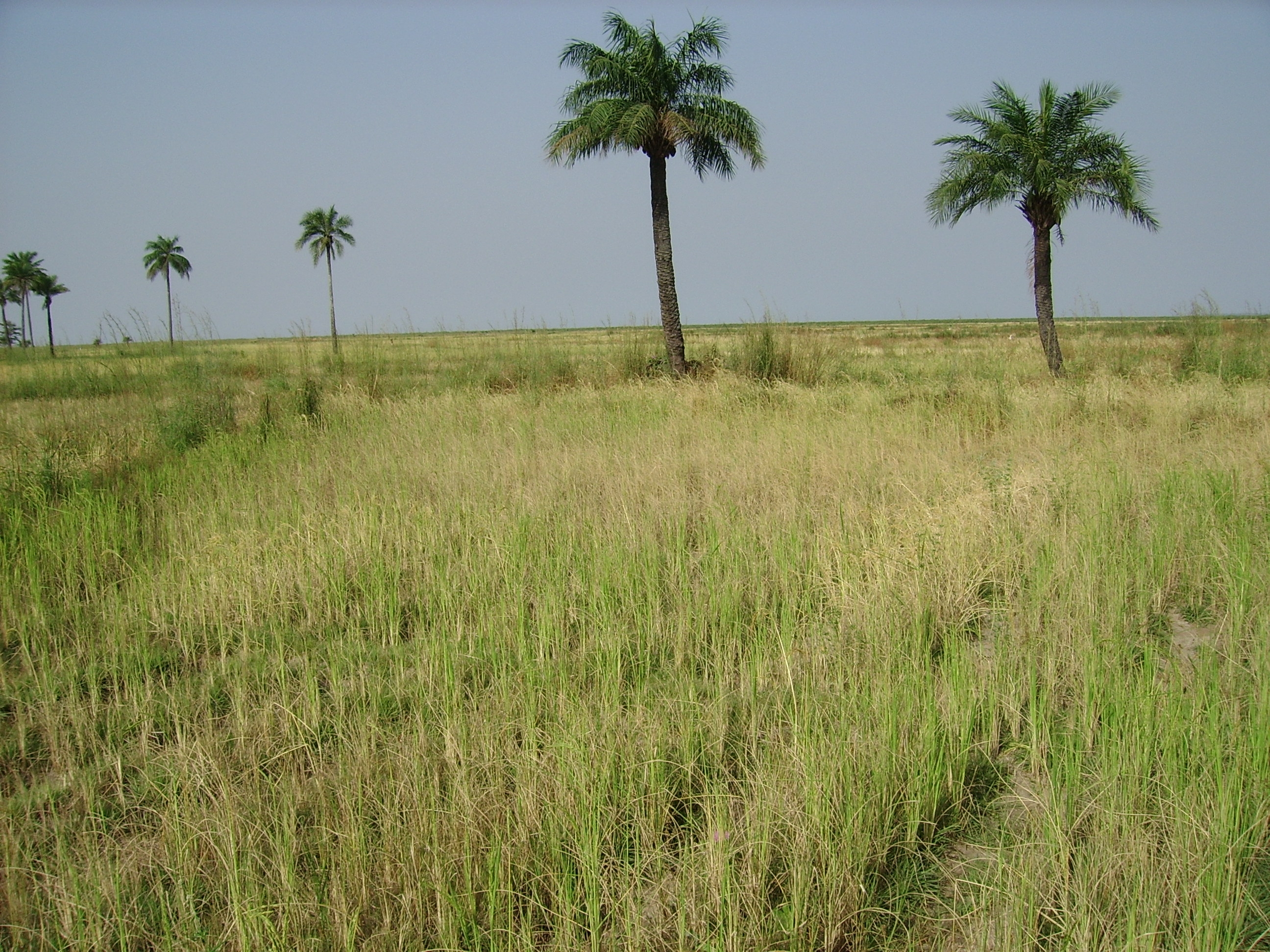 A dried-up rice field in Senegal's Casamance region.