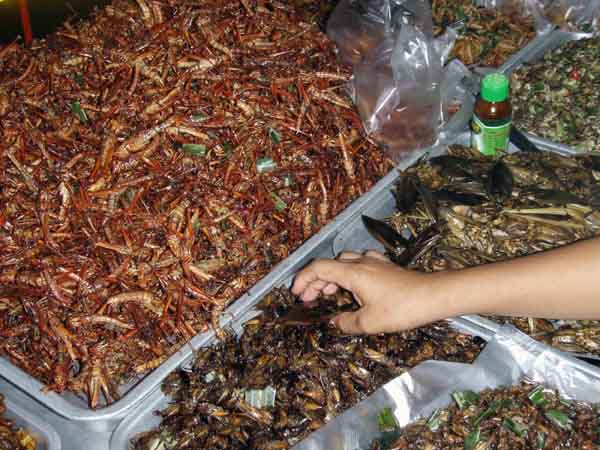 In the heart of Bangkok, a street vendor sells a variety of fried insects, including grasshoppers, beetles and giant waterbugs.