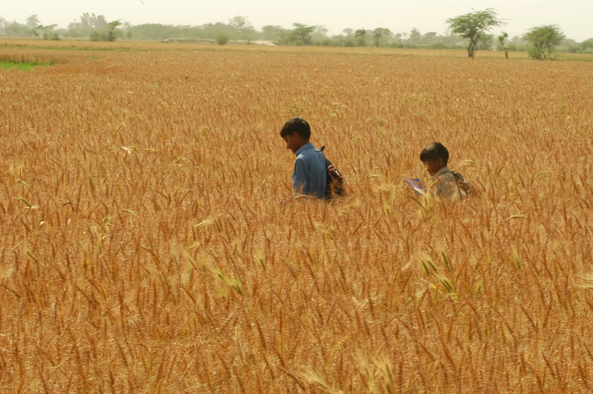 Pakistan's wheat crop is vital to the country's 160 million inhabitants.
