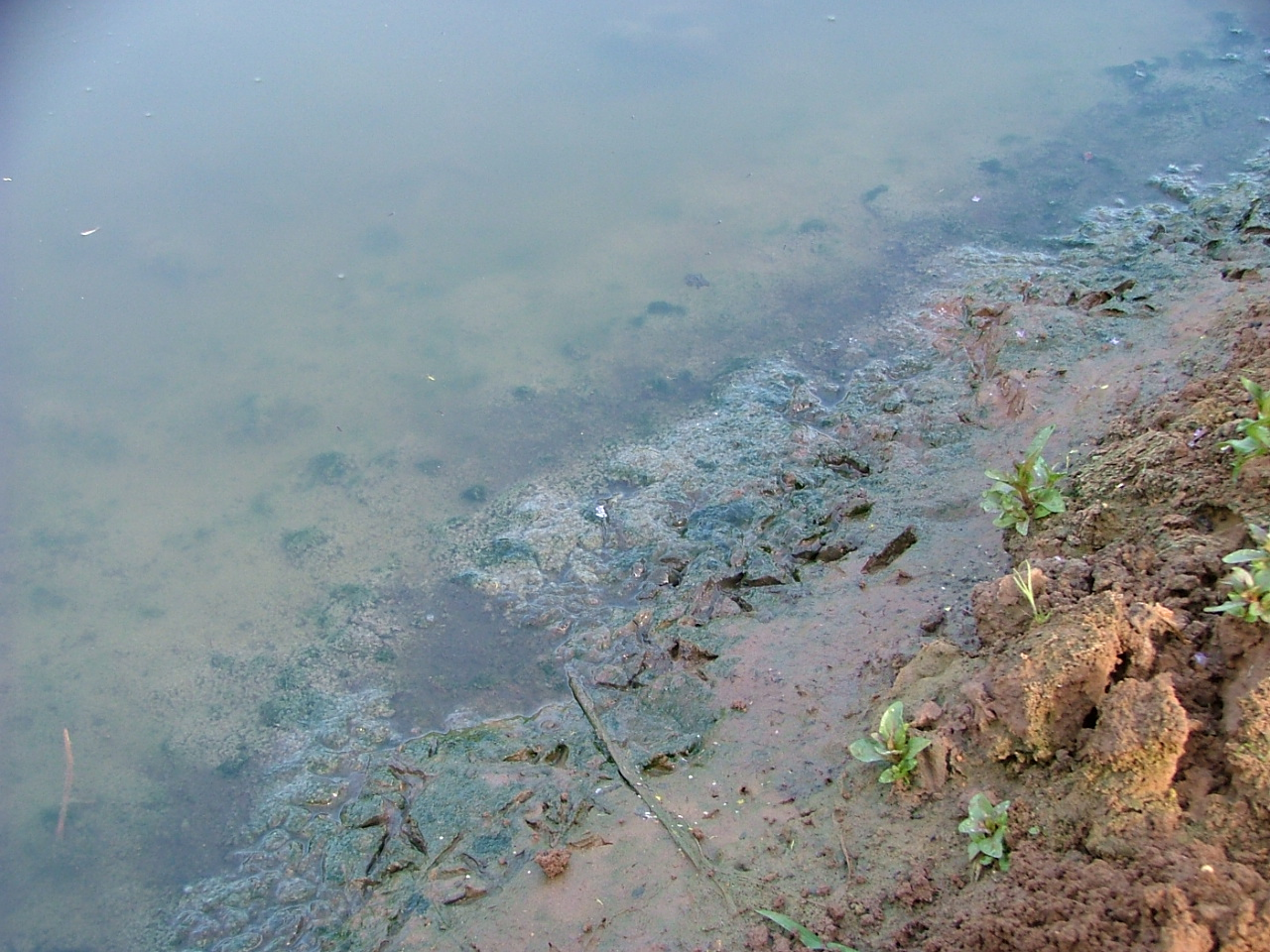 Murky, polluted water in the Kishon river near Haifa.