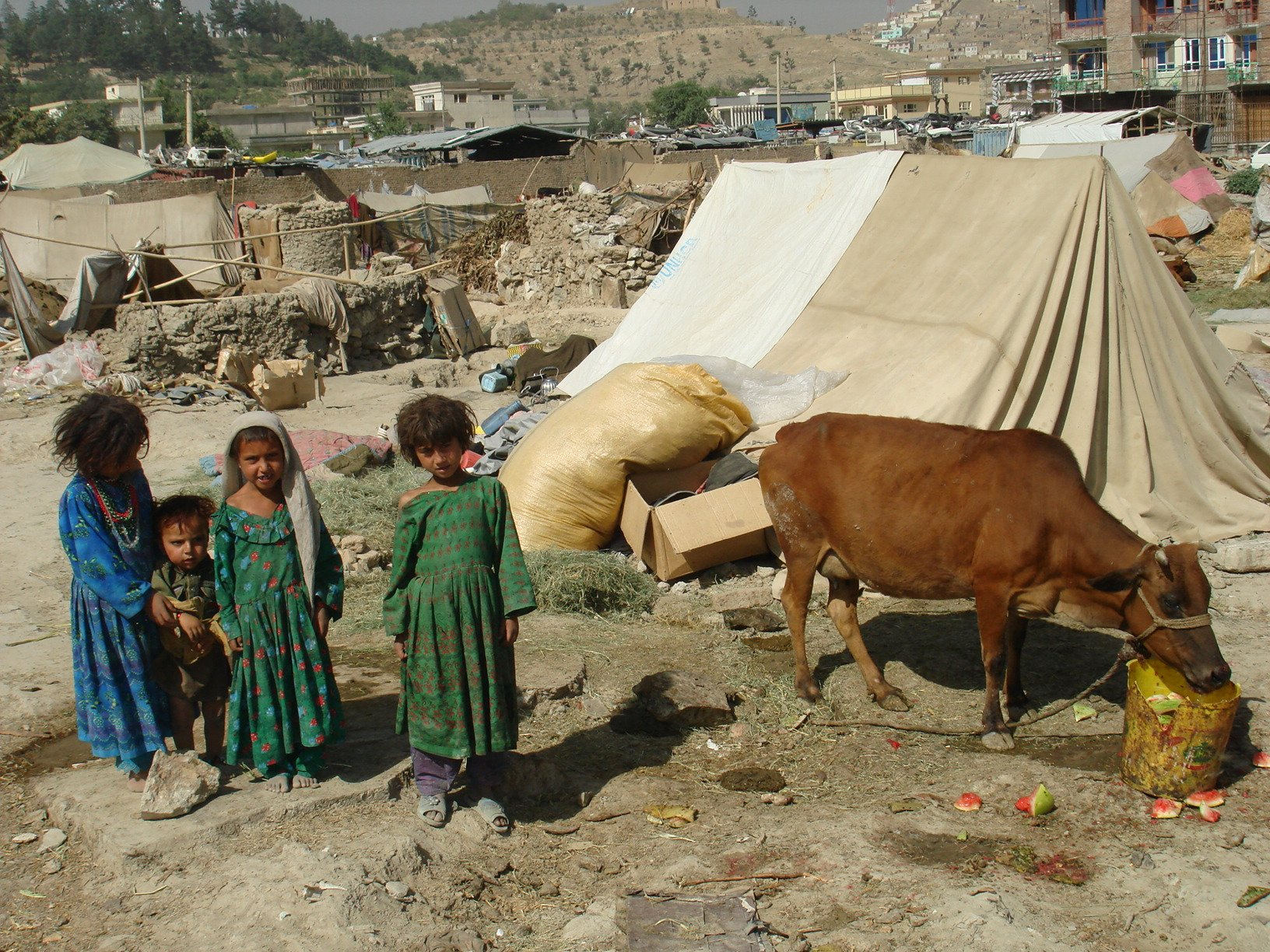 There are estimated 2-3 million Kuchis (nomads) in Afghanistan who traditionally herd animals on grazing land throughout the country.