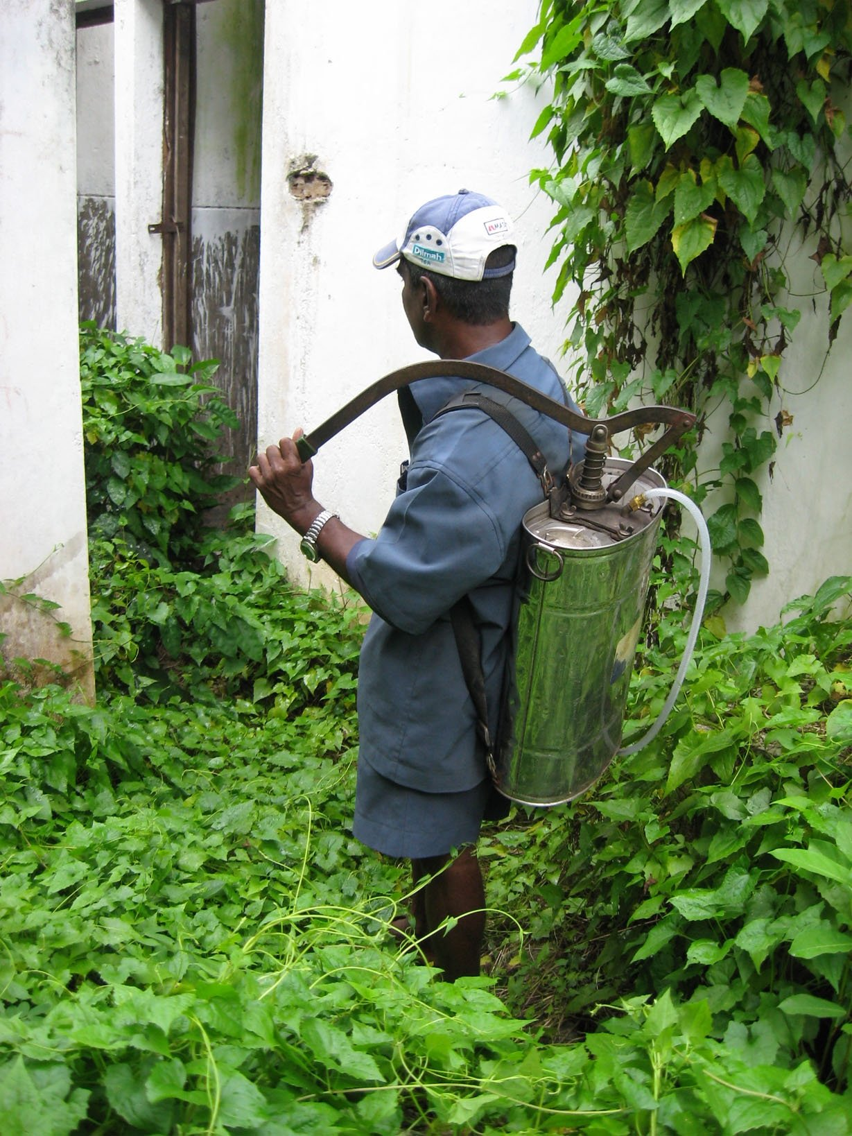 Local government workers, like this man from the Colombo Municipal Council, are regularly deployed to spray insecticide in homes, gardens and along roadways islandwide.