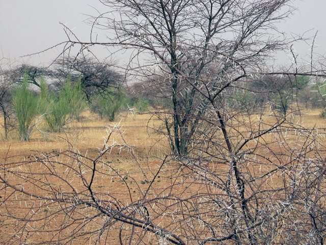 The 17 villages covered by a GEF-funded climate change adaptation project in the North Kordofan region were asked to  allocate a piece of land for grazing only to help rejuvenate the soil.