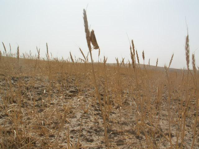 Irin Low Rainfall Affecting Agricultural Production Fao