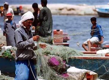 About 7,000 fishermen depend on Lake Maryut for their livelihoods and a further 10,000 work in fishing-related jobs such as ship-building, net-making and fish trading.