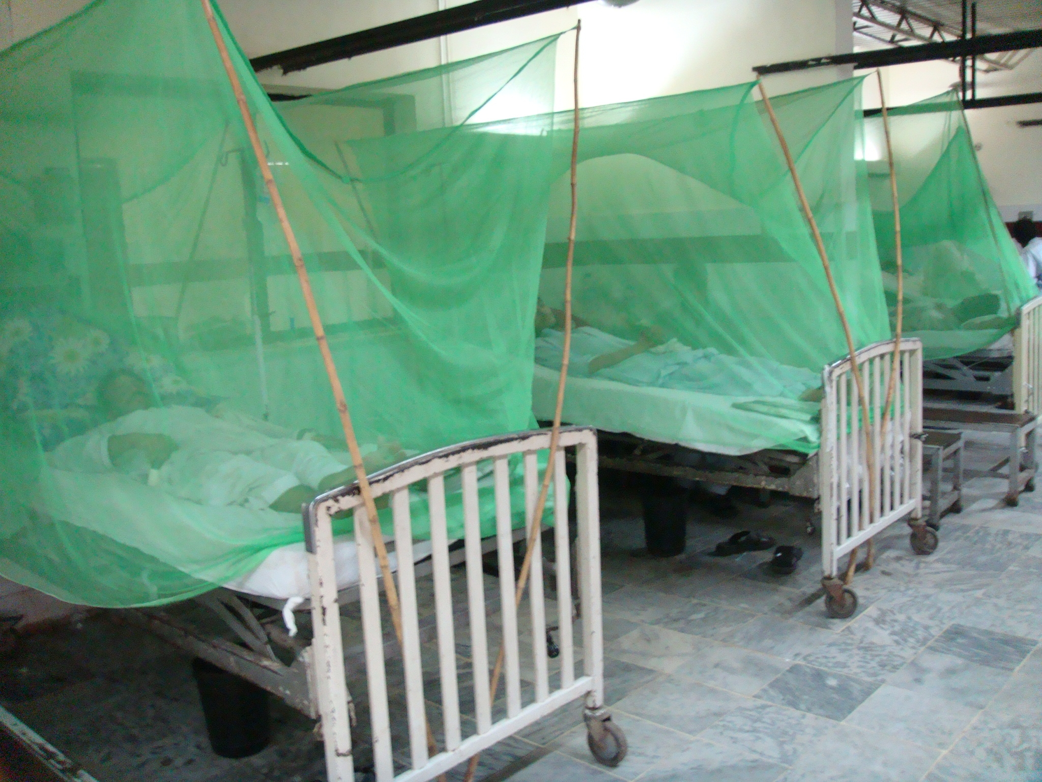 Medicated mosquito nets are important in fighting the dengue fever threat.