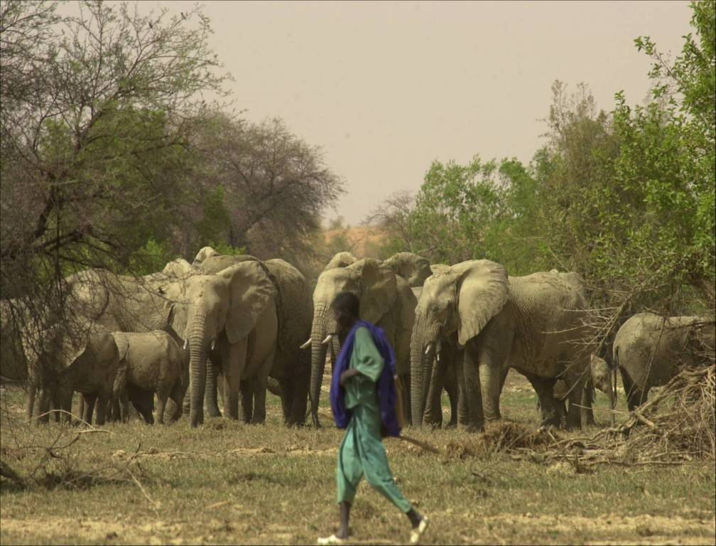 Elephants roam Mali's desert- once again.