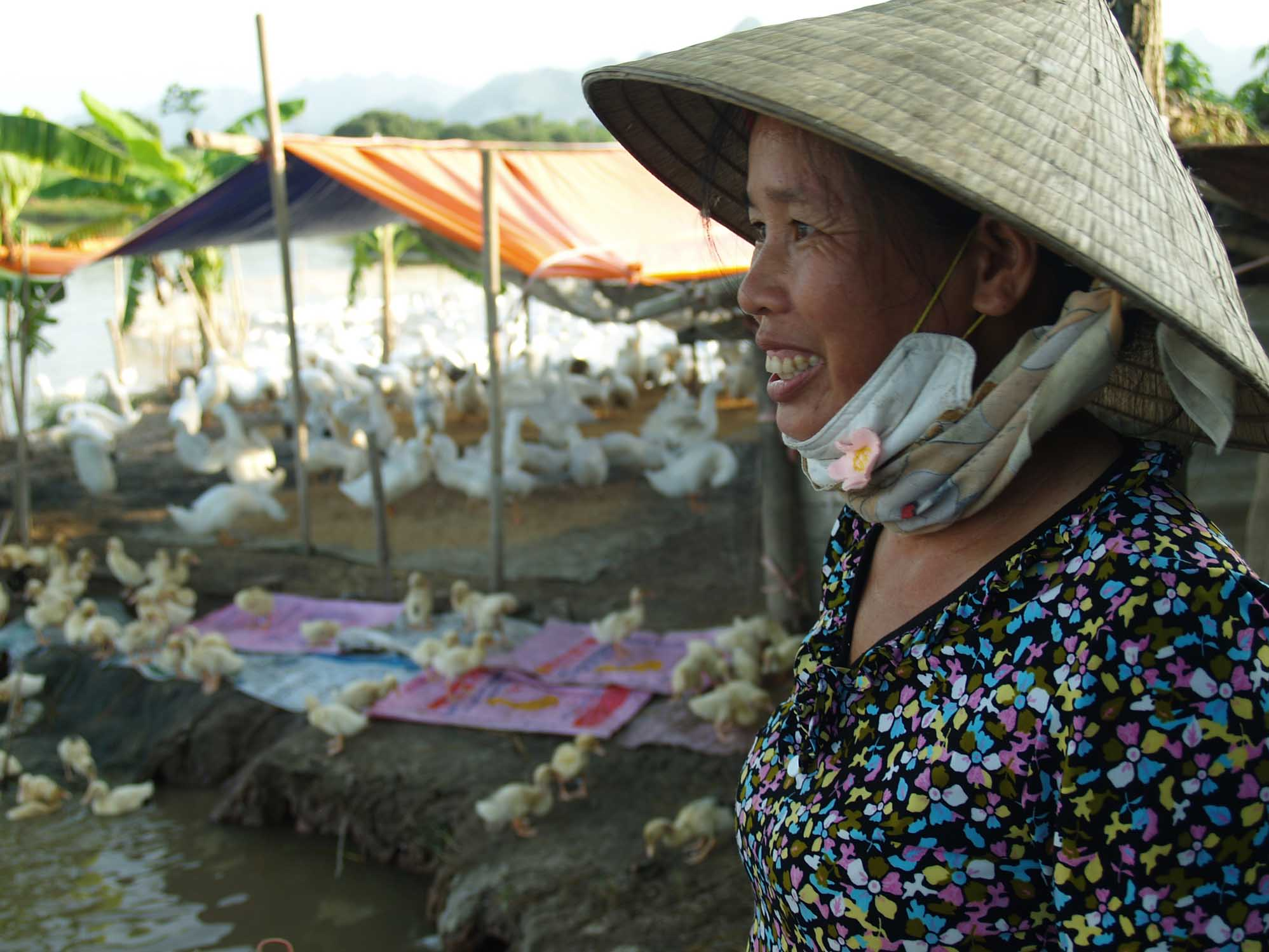 Hoang Thi Tien's at her duck farm in Que Commune, Kim Bang District, Ha Nam Province, only 100 metres from where 130 of her neighbour's ducks had to be culled because of avian influenza.