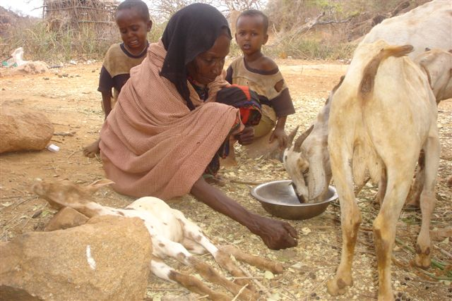Prevalent drought in Mandera, in the northeast, has led to severe water shortage which has caused livestock deaths.