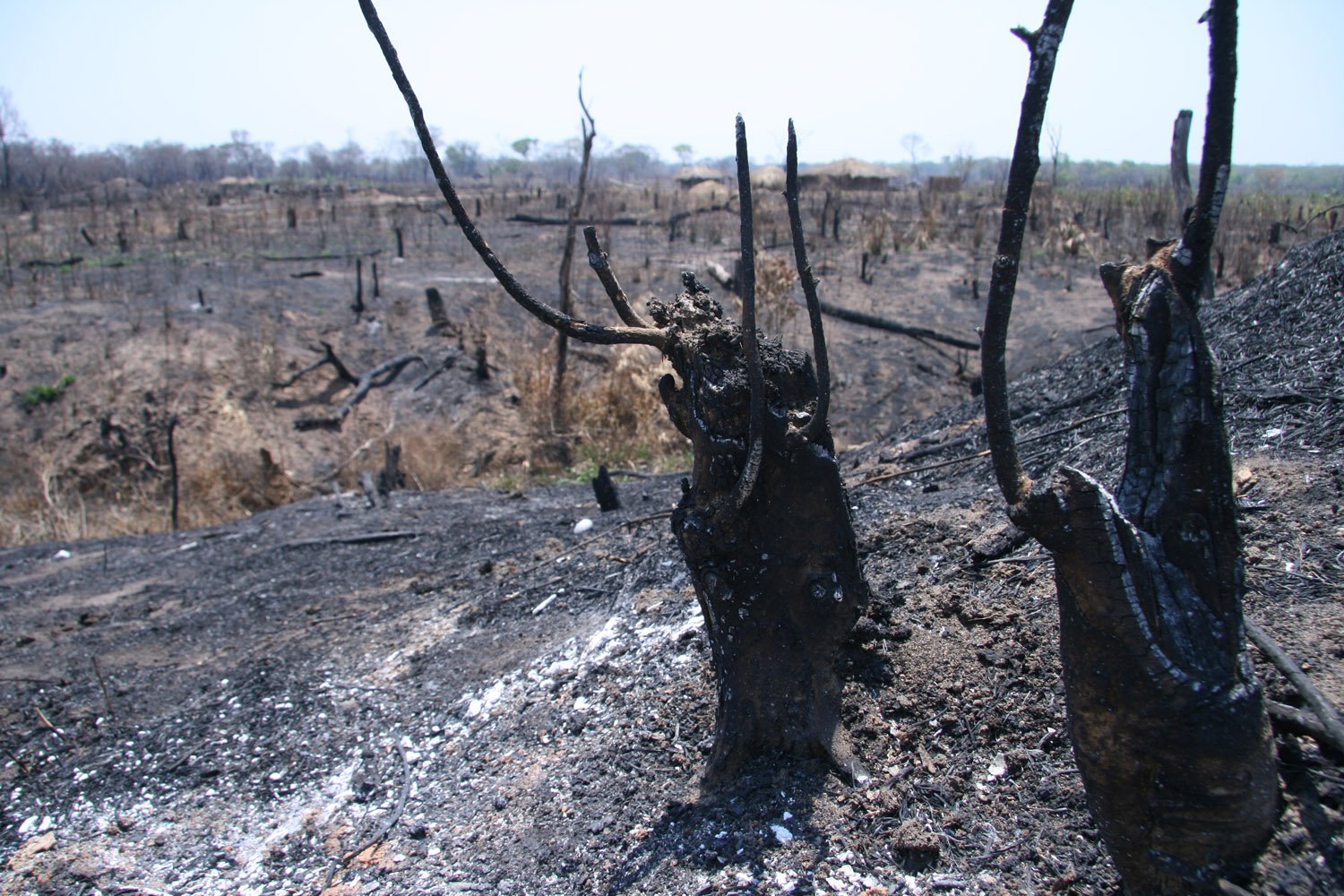 "An area of forest near Mopeia, Mozambique, 2008. ""slashed and burned"" to make way for agriculture."