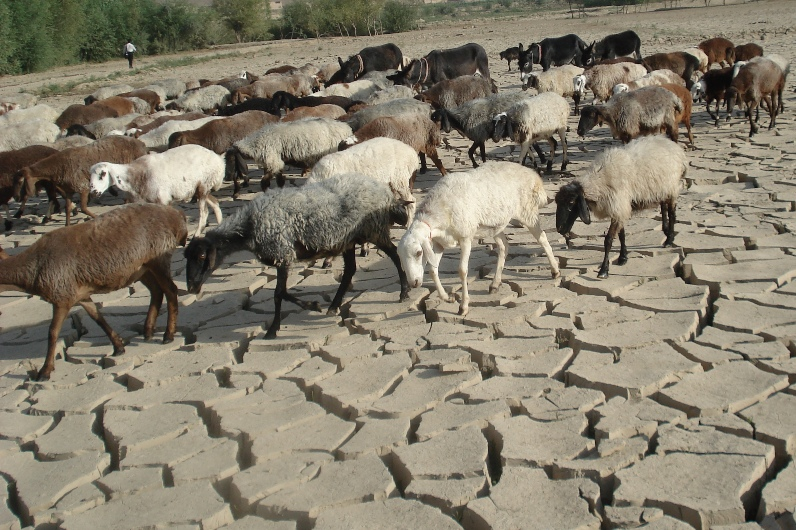 Recurrent drought has dried up pasturelands and water wells leaving animals with very little to eat and drink.