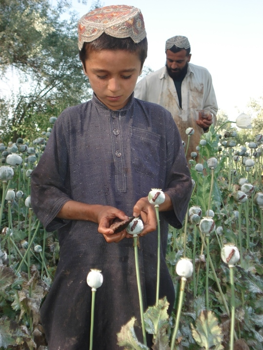 Afghanistan has been the top opium producing country in the world over the past several years