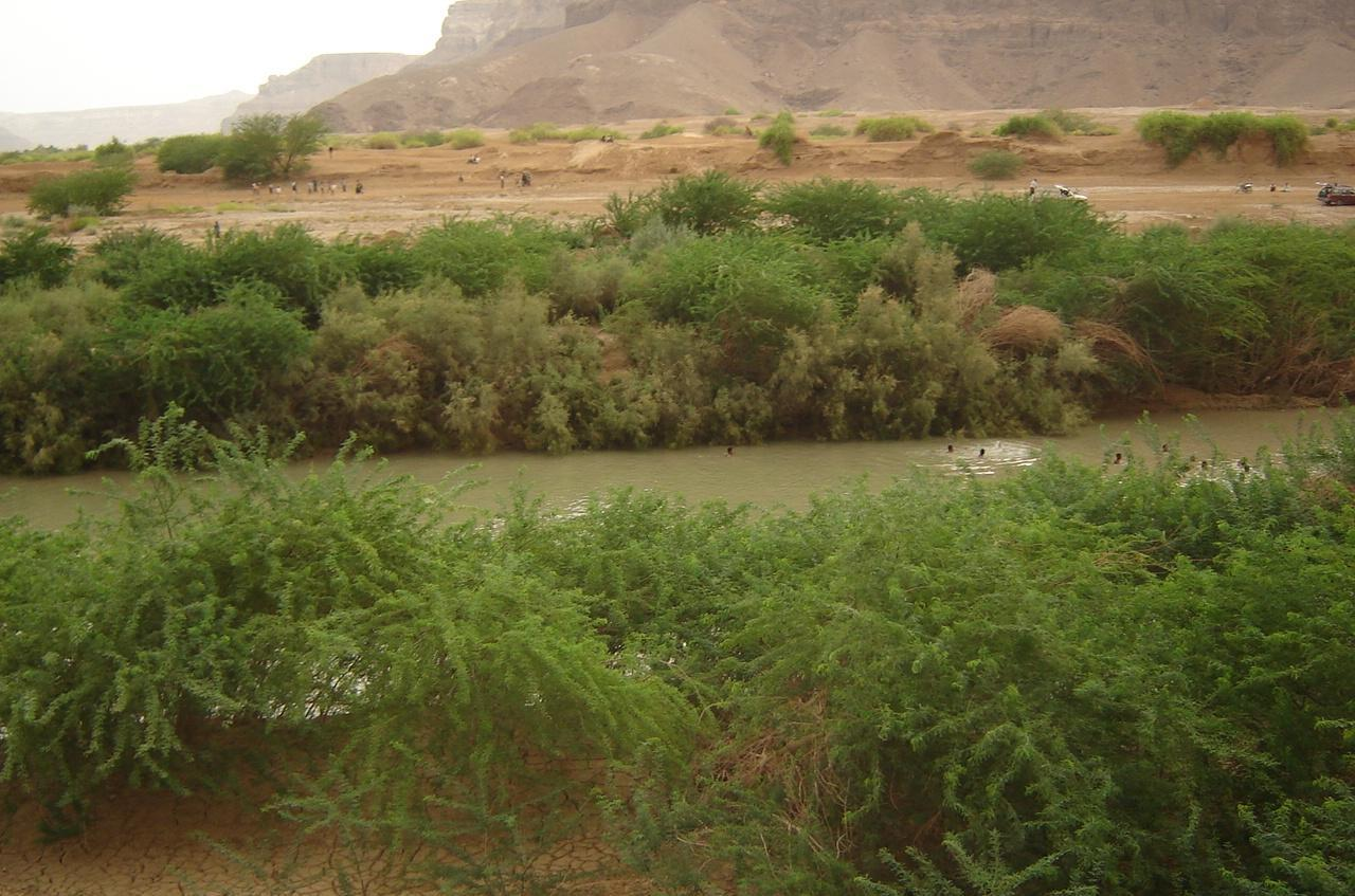 Experts say that Prosopis juliflora, commonly known as Mesquite, is responsible for exacerbating the late October floods in Yemen by blocking watercourses and diverting floodwater into villages