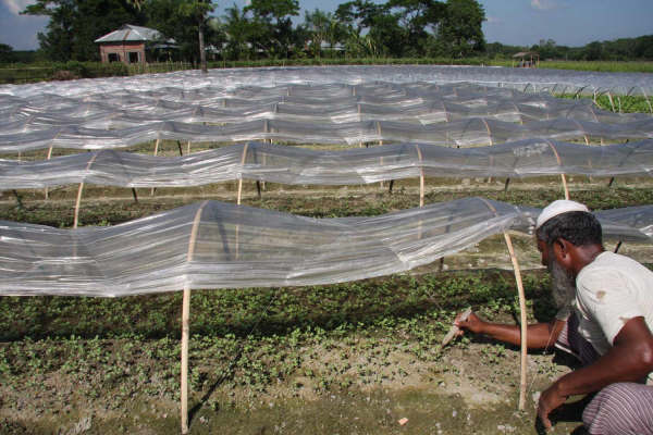 Farmers in Bangladesh's coastal areas - in a bid to address climate change -  now plant on raised vegetable beds in an effort to maintain the soils moisture