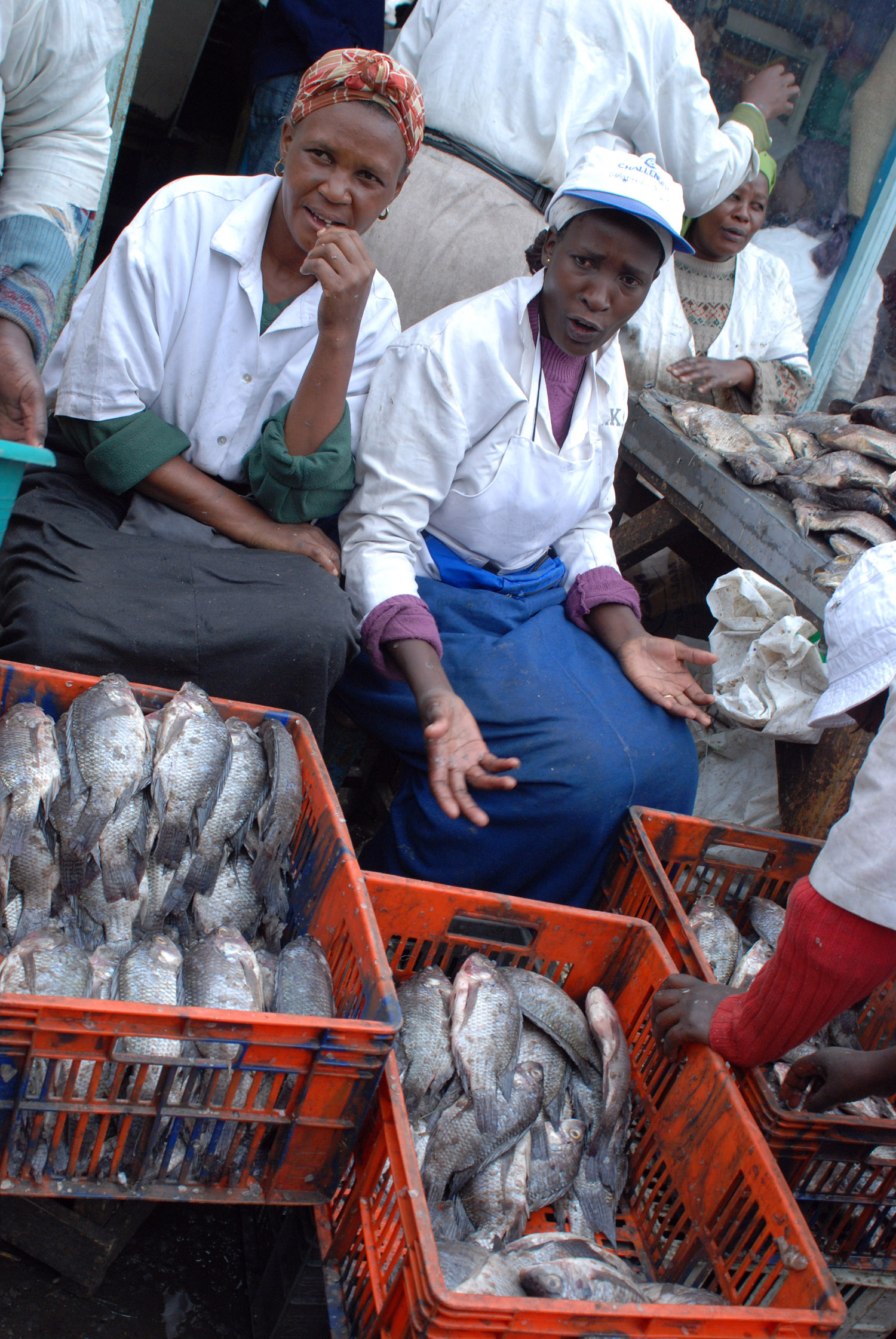 Women selling fish in Nairobi Gikomba market, Kenya 2009.Top international experts say millions of people are being pushed deeper into poverty and hunger by high food prices