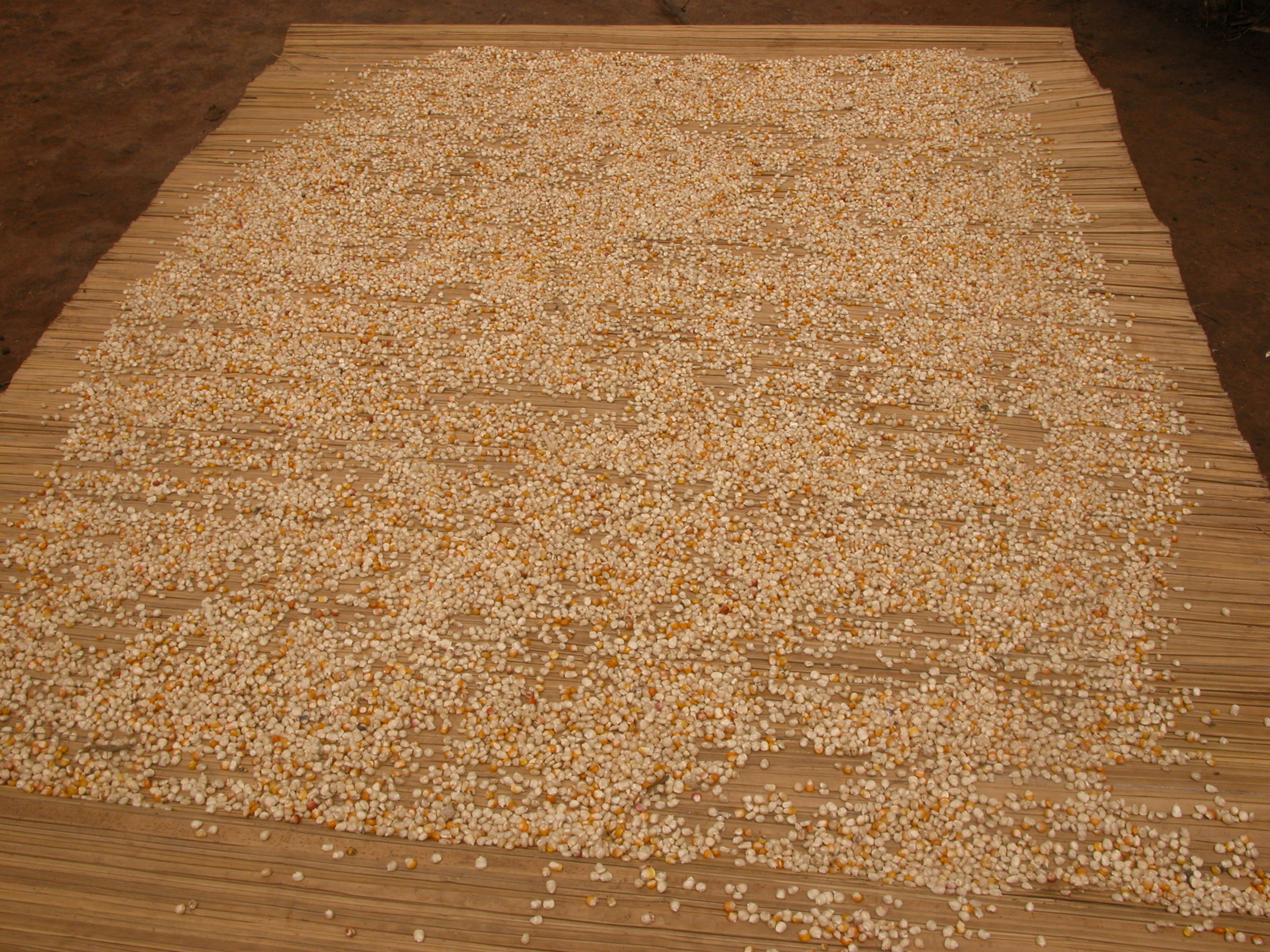 Maize in the market is unaffordable for most Malawians
