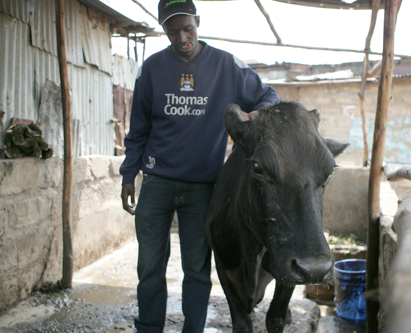 Hillary Wachira, a member of the Kangaroo Youth Self-Help Group in Kosovo area of Mathare, attends to one of the group's cows, whose milk they sell to the local community