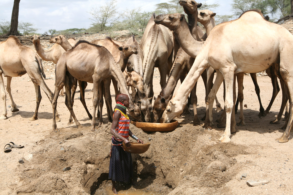 A Turkana girl waters camels from a hole dug in a dry river bed near Kenya's border with Uganda. Increasing drought has obliged pastoralists to travel further in their search for pasture and water. This often brings them into conflict with rival pastora