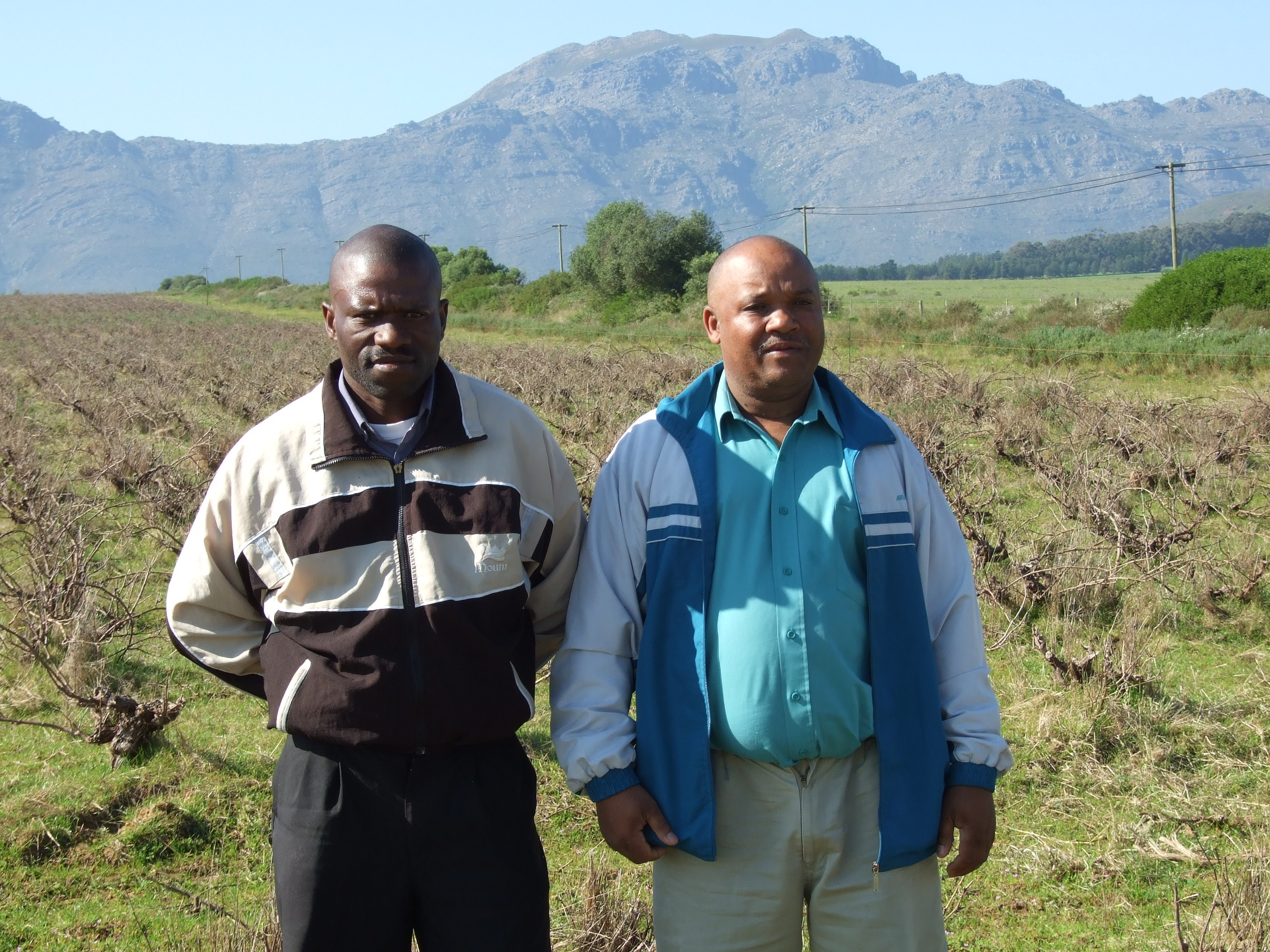 Kallie Geslin (left) and Charles Pietersen standing in front of vines belonging to their former Groenberg Wine farm near Paarl in the Western Cape. The men were part of a syndicate that bought the farm under the government's land reform programme, but it