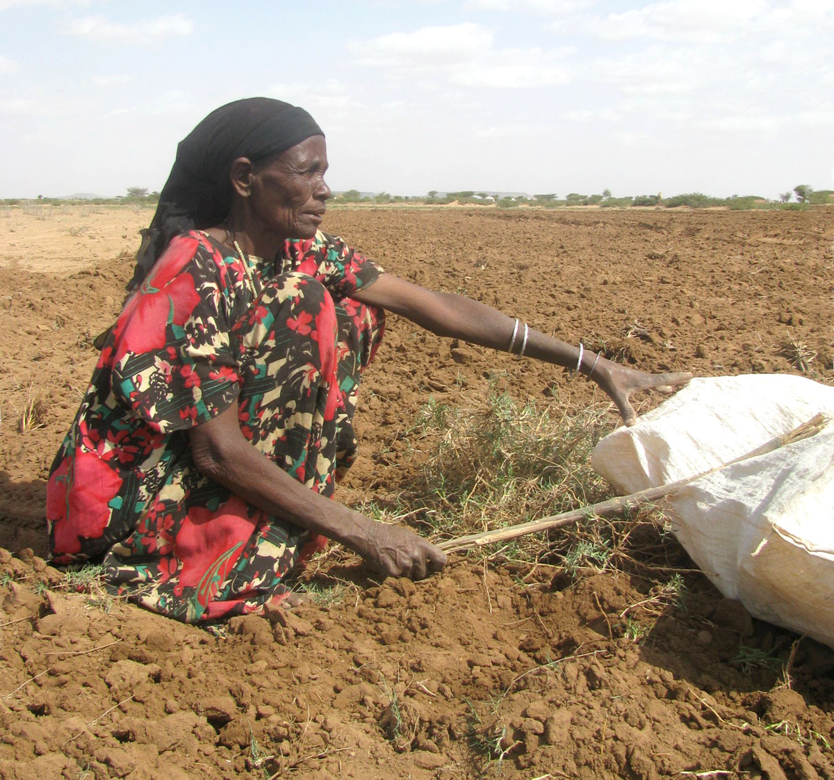 Severe drought has affected the villages in the south of Somaliland, particularly the Midwest regions and several farmers have lost their livestock