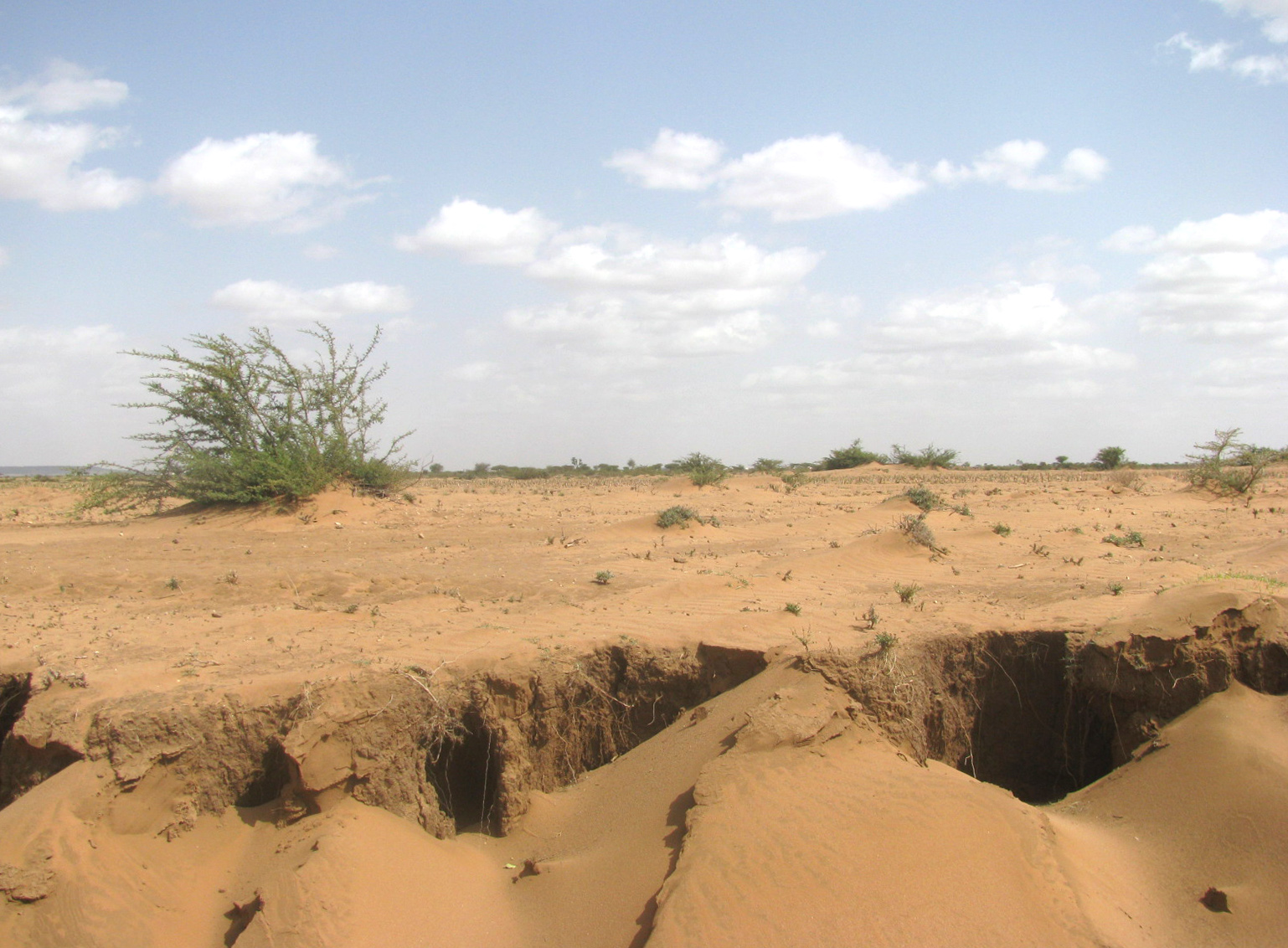 Grasslands that have turned into desert after lacking rain for the last several rainy seasons
