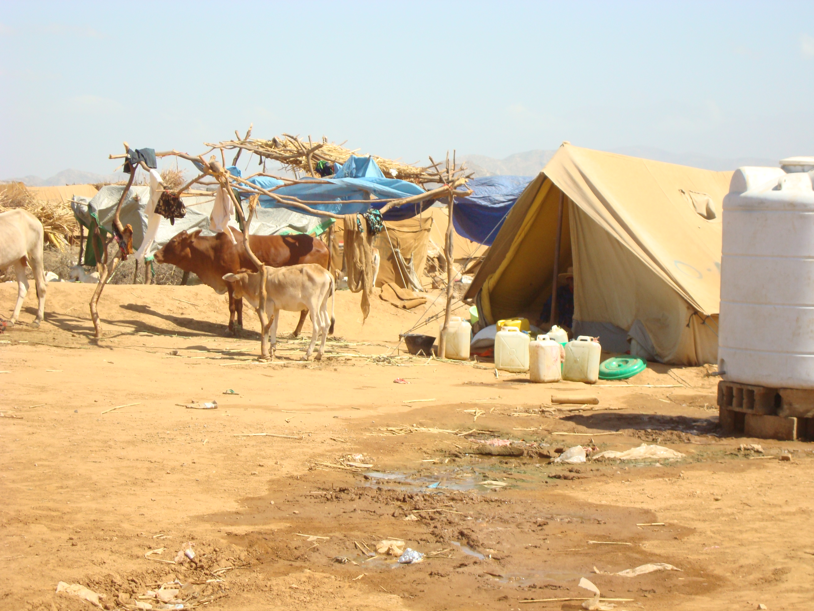 Dealing with livestock brought to the al-Mazraq camp by IDP is a challenge