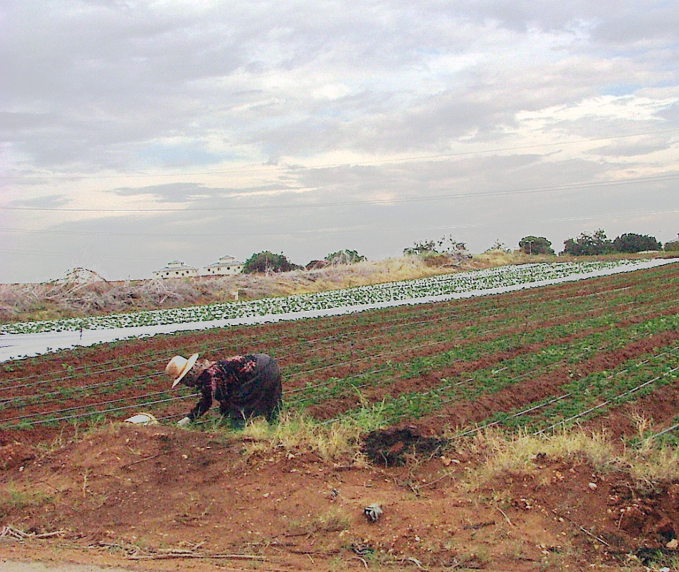 Some 30,000 migrant workers are employed in Israel's agricultural sector, mostly from Thailand, Nepal, Sri Lanka