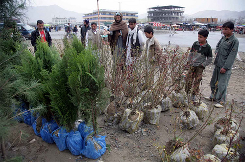Tree planting is expected to tackle air pollution and desertification