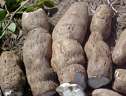 Cassava - for generic use