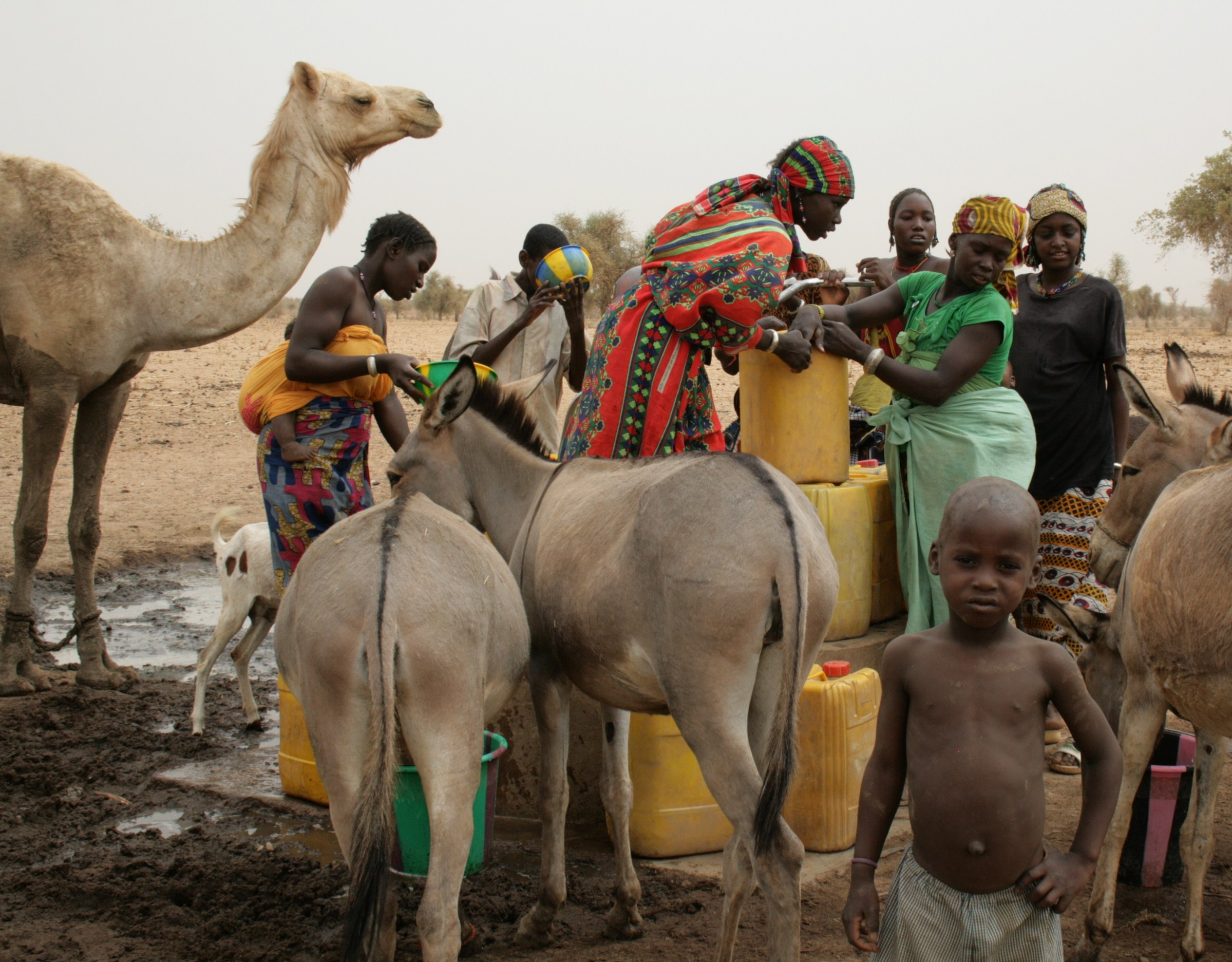 Animals gather around a pump as women fill jerry cans with water to take to their homes some 15km away. Dori, northeastern Burkina Faso. April 2010