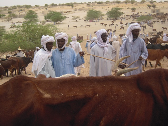 Weekly cattle market in Mao, western Chad's Kanem region