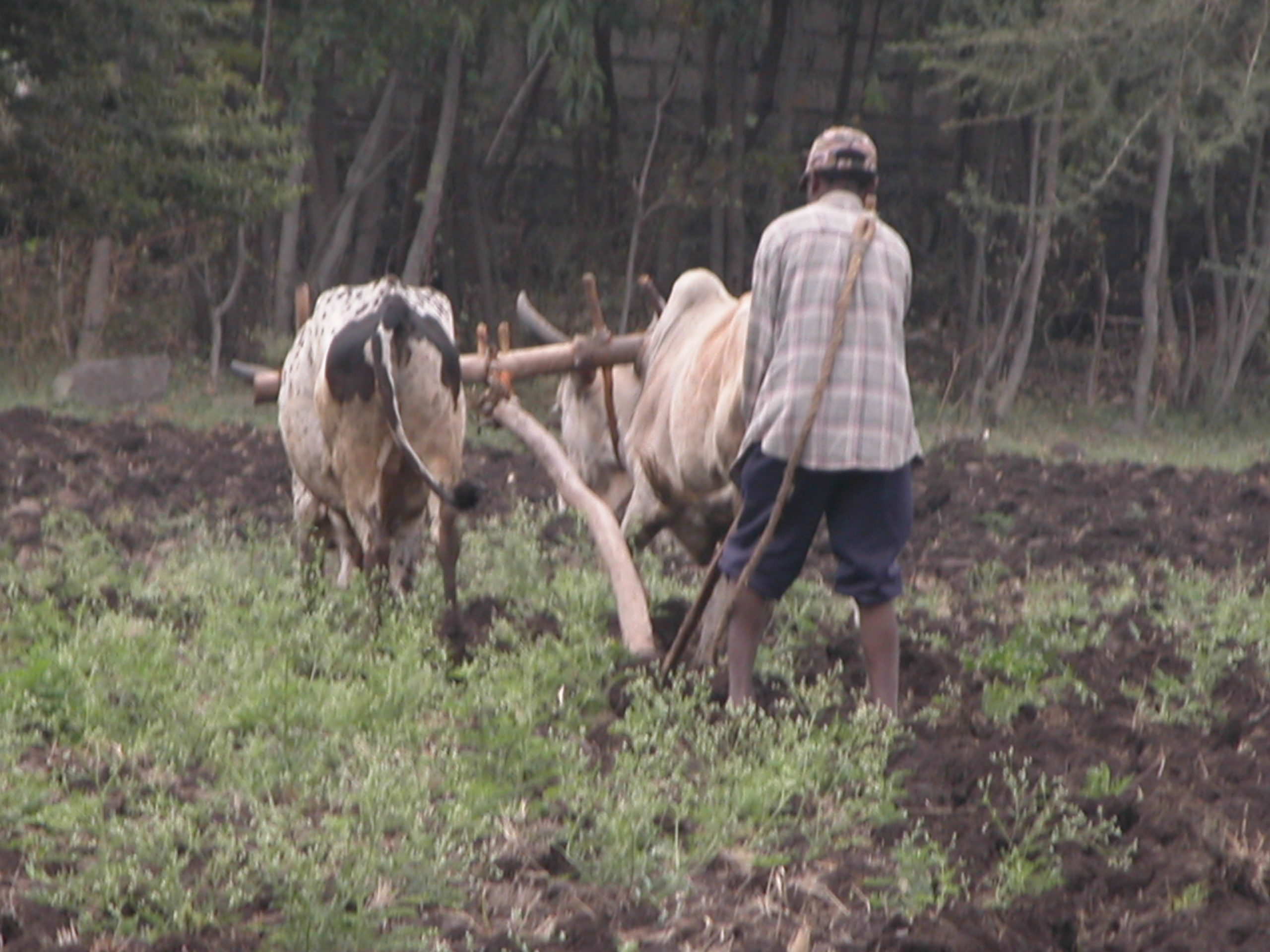 Small-scale farmer in the Amhara region