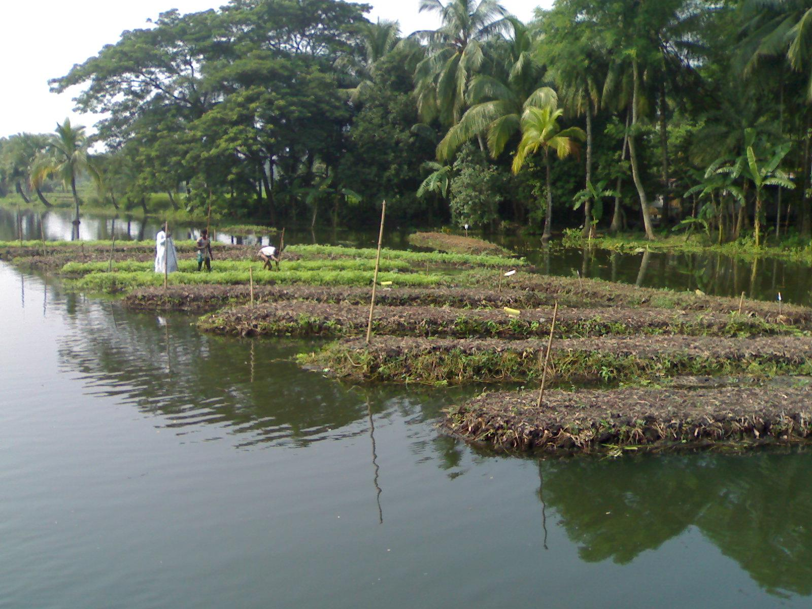 In face of floods and climate change, Bangladesh is turning to floating farms